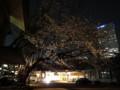 20130321 夜桜 日枝神社