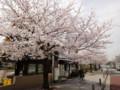 20130328 公園の桜