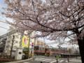 20130328 公園の桜 東急池上線