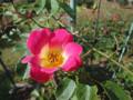 カクテル 神代植物公園