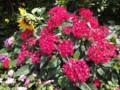 駅前花壇のお花