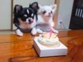 わんこの誕生日 1歳