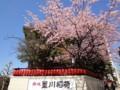 140322 赤坂豊川稲荷 桜