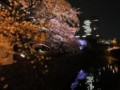 赤プリの桜 ライトアップ 弁慶堀