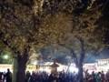 140405 靖国神社 夜桜
