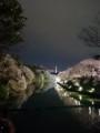 140405 千鳥ヶ淵 夜桜