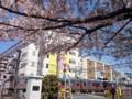 140407 桜 電車