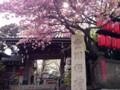 赤坂豊川稲荷 八重桜