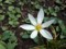お庭のお花 雨上がり