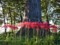 走湯神社の大杉