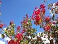赤い実 青空 秋 9月