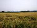 田舎の風景 秋 9月