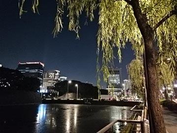141029夜 皇居のお堀 柳