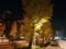 夜の銀杏 イチョウ