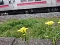 線路脇の風景 春