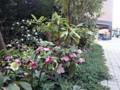 マンション 植栽