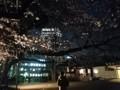 150328 山王日枝神社 桜