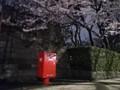 150329夜 国立国会図書館 桜