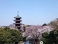 150330 池上本門寺 桜 サクラ