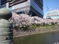 150331 桜 弁慶堀
