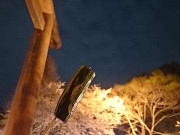 150403 靖国神社 桜