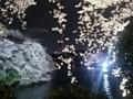 150403 千鳥が淵 桜
