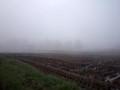 霧の朝 田んぼ あぜ道