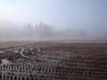 田んぼ 霧