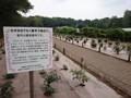 神代植物公園 バラフェスタ 新種