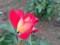神代植物公園 バラフェスタ 希望