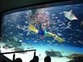 サンシャイン水族館 池袋