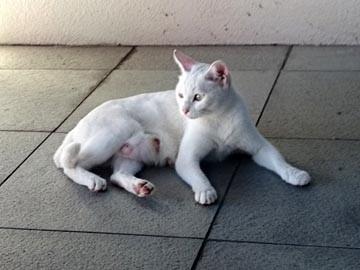 野良猫 白