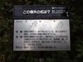 上野公園 樹木クイズ