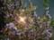 160422 夜桜 八重 関山 カンザン