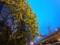 160424 夜 ハナミズキ 花水木
