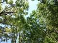 160430 ケヤキ並木