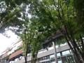 豊島区役所のケヤキ並木