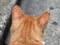 160607 猫 換気扇の下