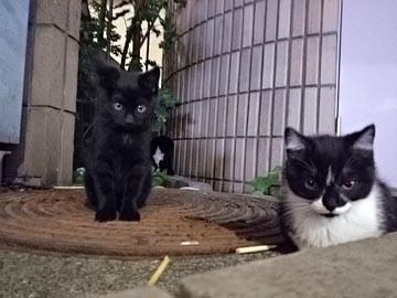 160611 野良猫 赤ちゃん