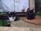 160615 野良猫 赤ちゃん