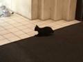 子猫 黒猫 夜 シルエット