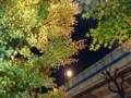 161217 紅葉 東京