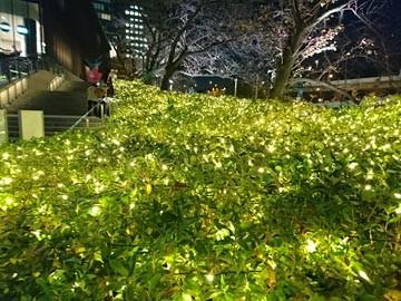 東京ガーデンテラス紀尾井町 イルミネーション