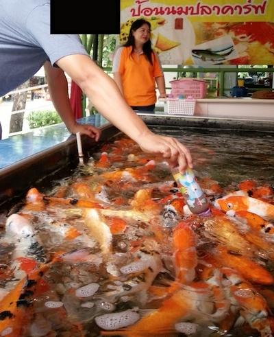 f:id:THAILAND:20161124161311j:plain