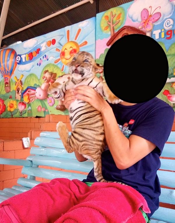 f:id:THAILAND:20161124161921j:plain