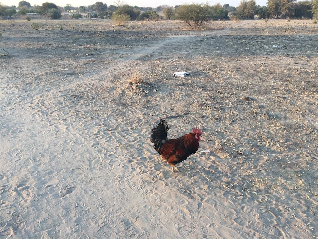 f:id:TPVC28-Namibia:20160803042106j:image