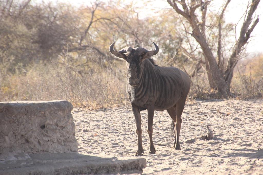 f:id:TPVC28-Namibia:20160808014712j:image