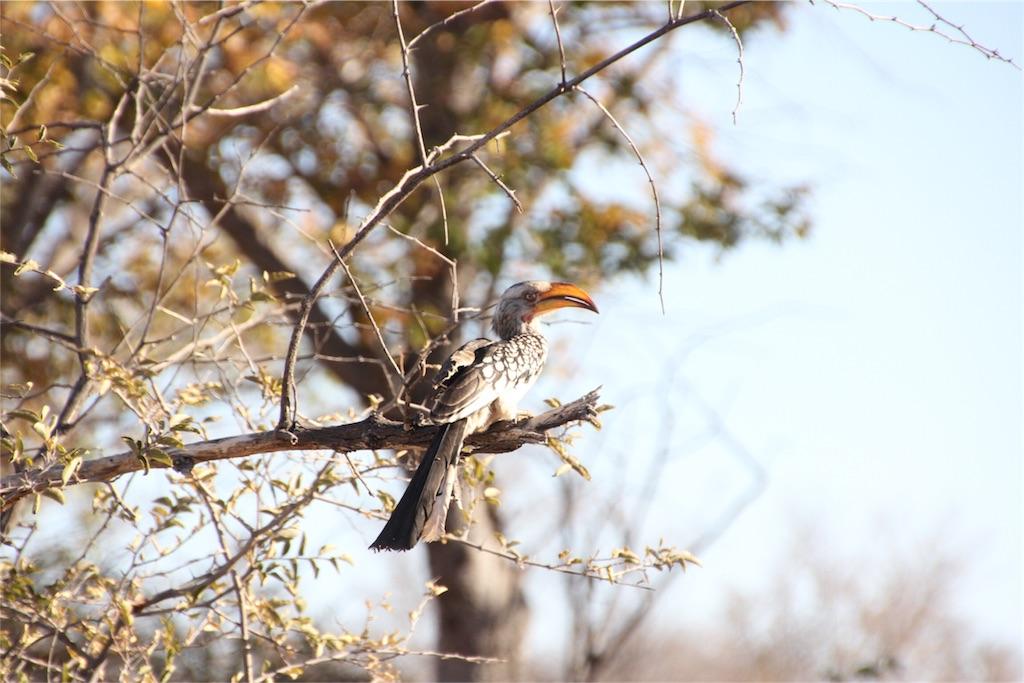 f:id:TPVC28-Namibia:20160808015201j:image