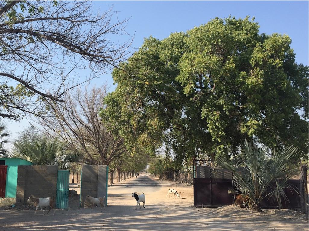 f:id:TPVC28-Namibia:20160819024856j:image
