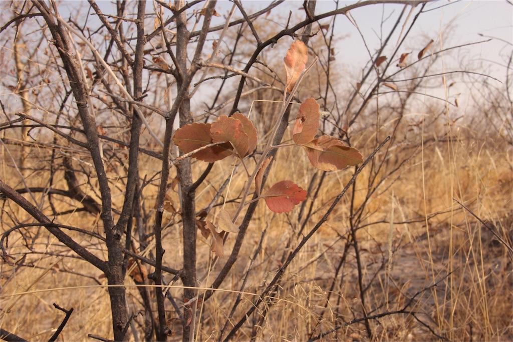 f:id:TPVC28-Namibia:20160823201011j:image